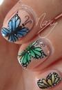 Papillons de couleurs